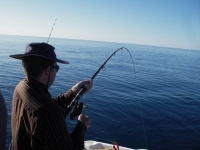 Dec2010StVincentsGulf 027.JPG